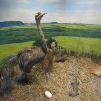 foto mostra ambiente do museu com reprodução do bioma pampa