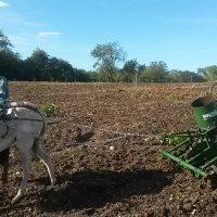 Máquina sendo utilizada no campo