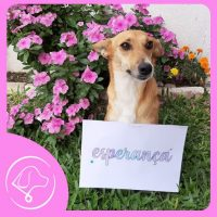 """cãozinho com placa dizendo """"esperança"""""""
